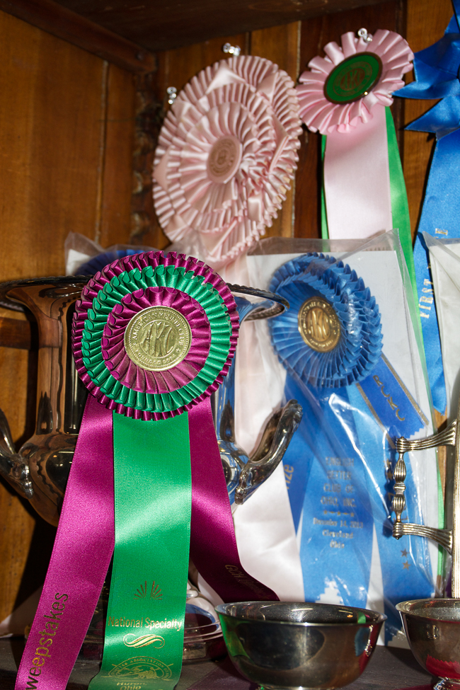 Ribbons in the trophy case | Stable Style
