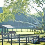 Horses out in the pastures at Blue Stallion Farm