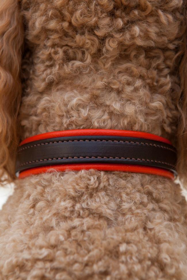 Leather Dog Collar with Orange Trim by Daisy1010
