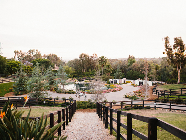LuckyJack Farms pastures and driveway