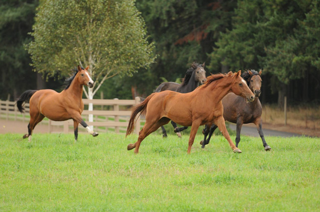 Mares in the pasture at Wild Turkey Farm