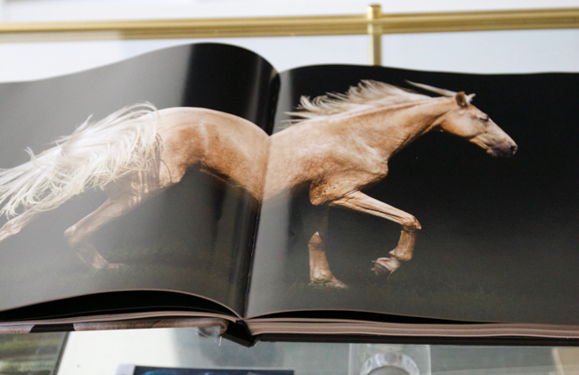 Flipping inside the book, Horse-Human- An Emotional Bond by Bob Tabor