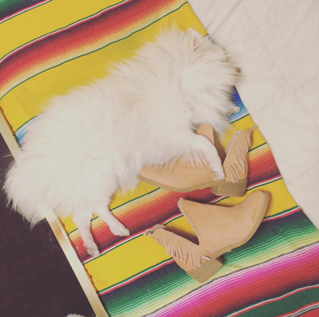 Mango the Pom and fringe booties