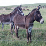 Visit Nebraska for a Western Adventure